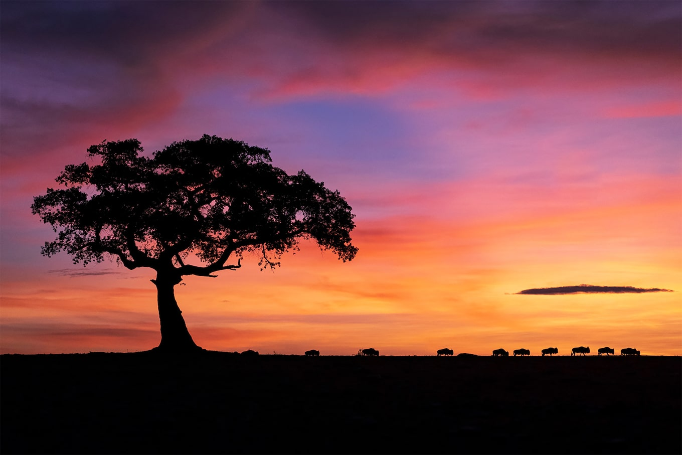 andreas hemb sony alpha 9 savannah landscape on a sunset with a tree
