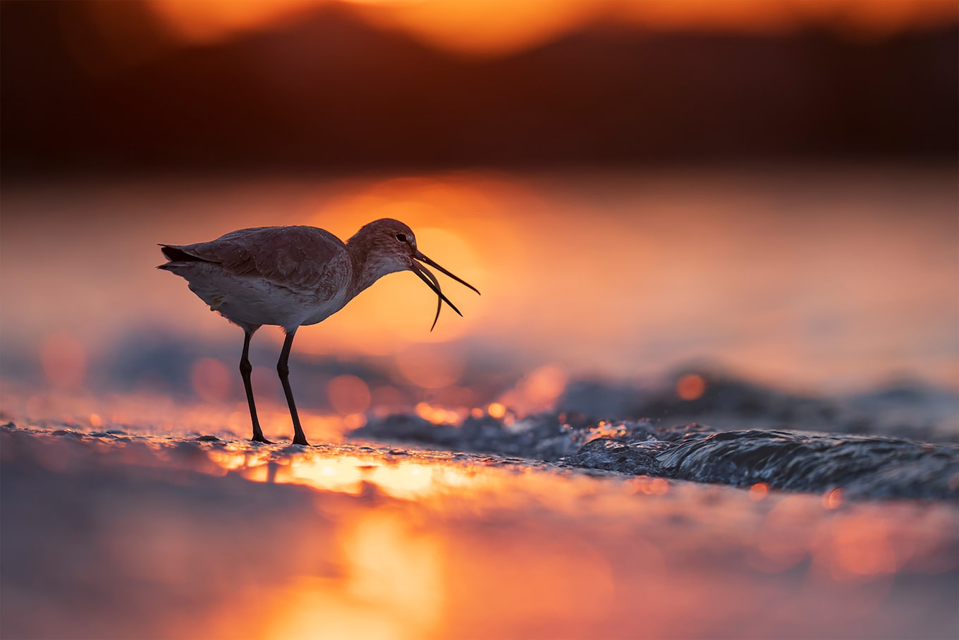 Andreas hemb sony alpha 7r3 bird with his tongue out standing in front of water