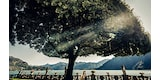 cristiano-ostinelli-sony-alpha-9-bride-and-groom-kissing-in-front-of-ocean-as-light-comes-through-a-tree