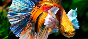 Image of fish showing 4K picture detail