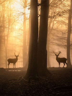 michael schaake sony alpha 7RIII two deer silhouetted amoung trees at dawn