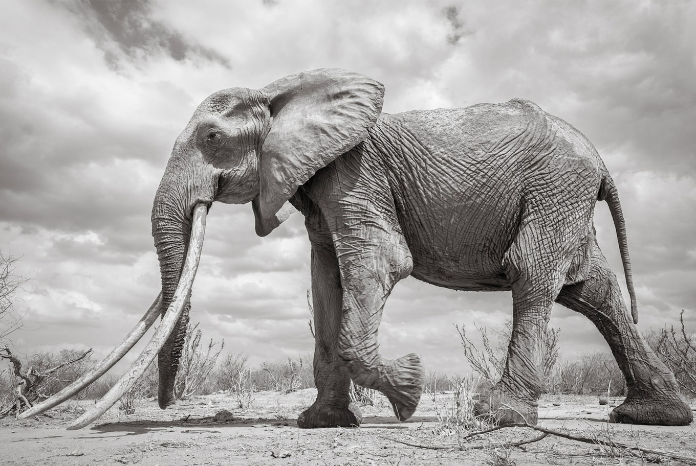 will burrard lucas sony alpha 6500 black and white elephant view from the side