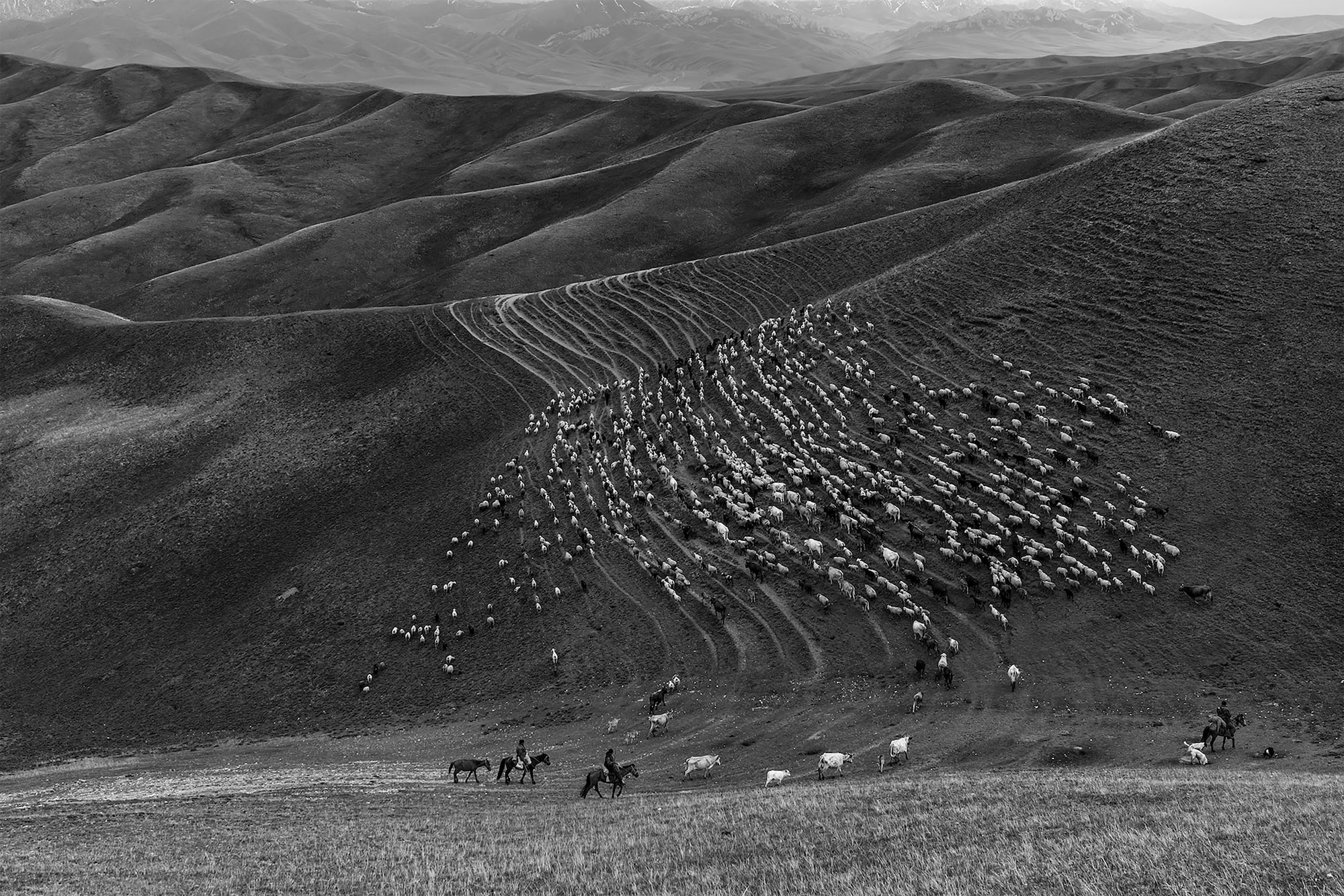 frederik buyckx sony alpha 7RM3 horseback shepherds lead a flock of sheep up a twisted mountainside