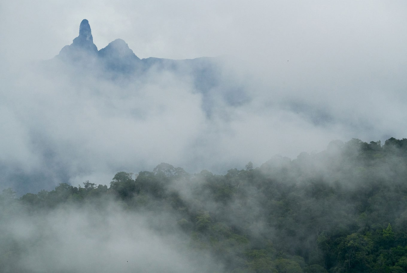 Tomas Wuethrich sony alpha 7RM3 mist envelopes tree topped mountains