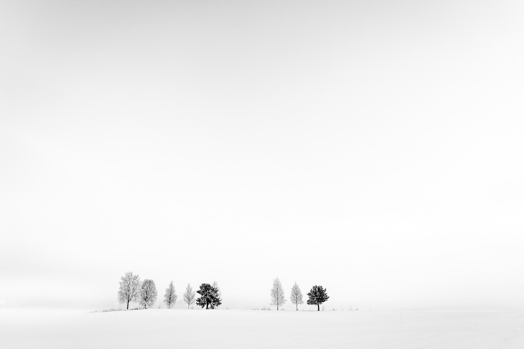 michael schaake sony alpha 7RM4 a row of trees standing on the horizon of a snowy landscape
