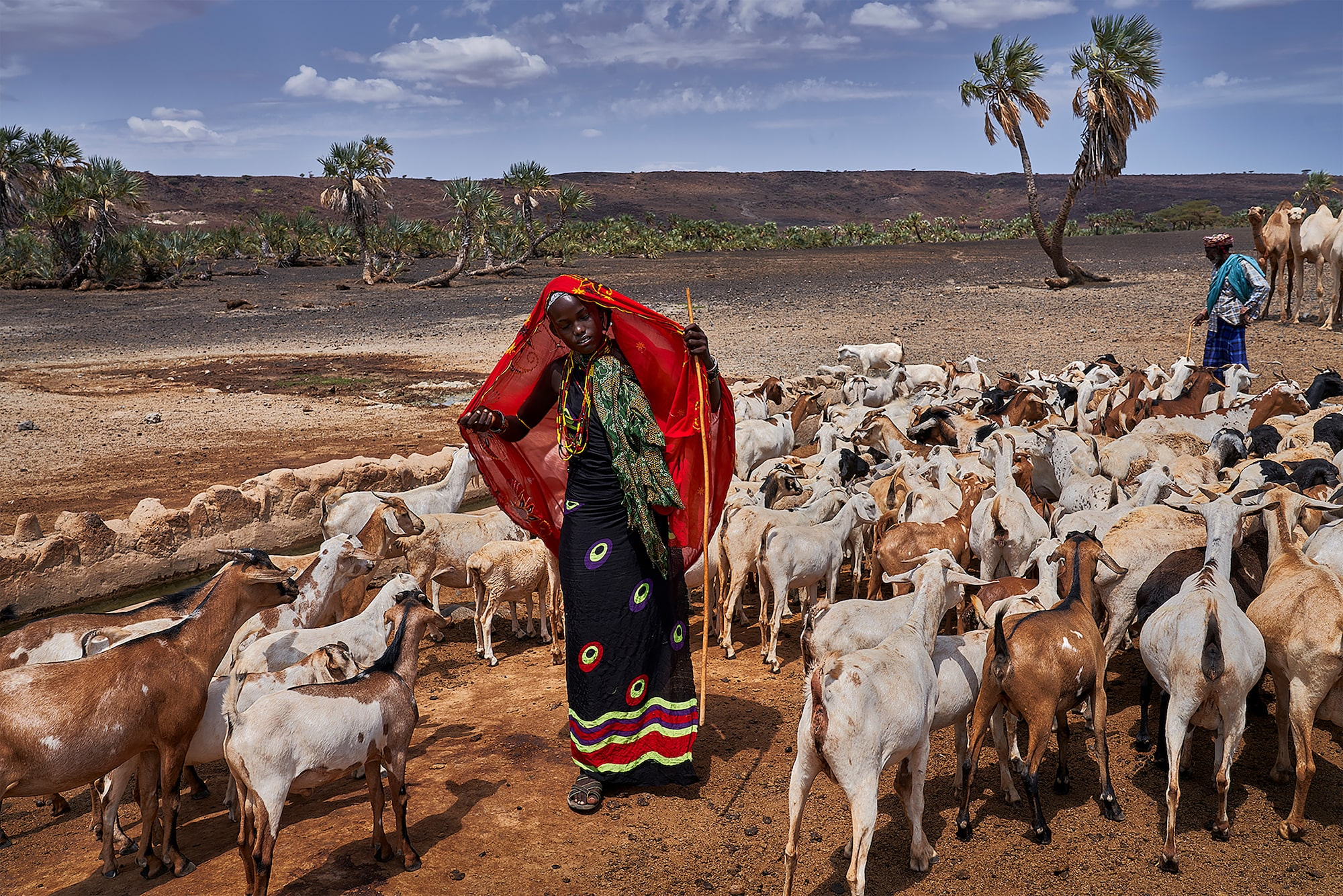tomasz tomaszewski sony alpha 7RM3 young kenyan girl with a red shawl over her head leading a herd of goats